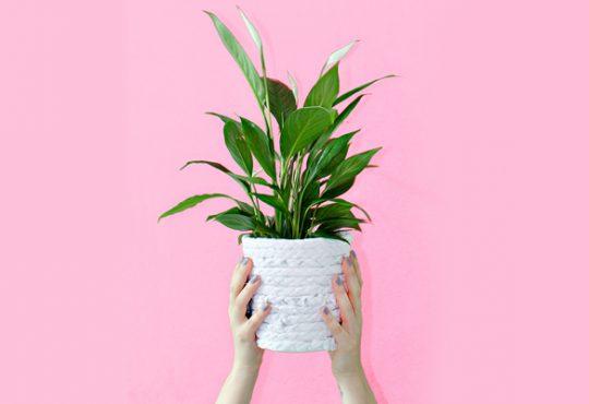آموزش تغییر ظاهر گلدان با تیشرت