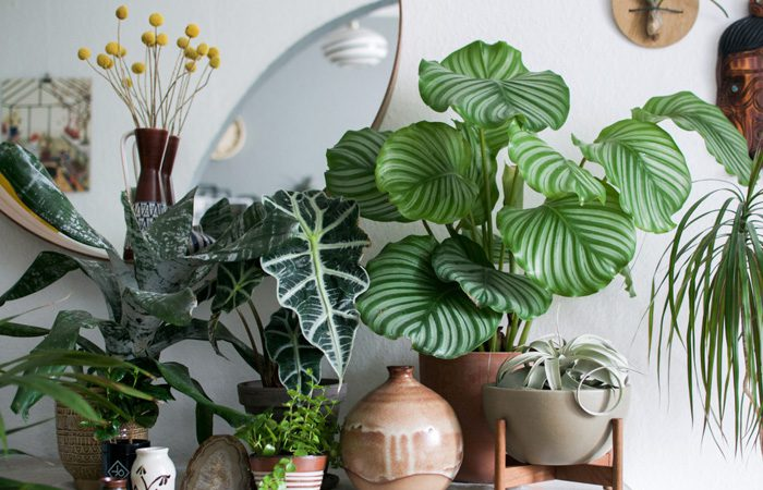 گیاه در دکوراسیون خانه