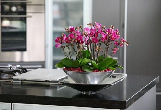 گل های آپارتمانی خوشبو